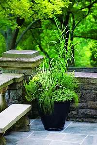 Grünpflanzen Im Topf : pfahlrohr ziergras topf dekorativ garten gestaltung ~ Michelbontemps.com Haus und Dekorationen