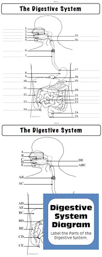 biology activities and labs digestive system label the