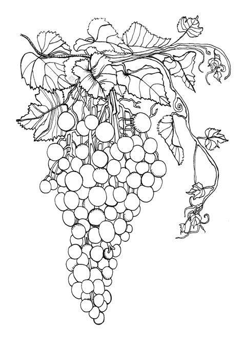 sweet coloring page cookillu