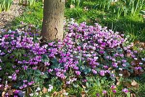 Que Planter En Juin : les plantes installer sous les arbres d tente jardin ~ Melissatoandfro.com Idées de Décoration