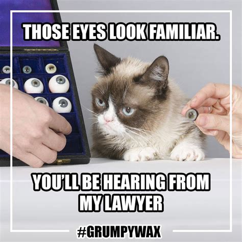 Cat Sitting Meme - internet sensation grumpy cat not happy to be named first madame tussauds cat fashion trendsetter