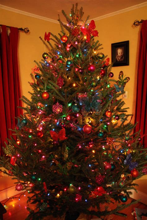 colored lights tree decorating ideas photo album