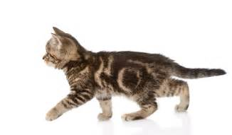 cats cats are an outlier among domestic animals ars