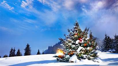 Christmas Outside Trees Decorated Uhd Tree 4k