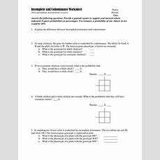 14 Best Images Of Genetics Problems Worksheet With Answer Keys  Genetics Practice Problems
