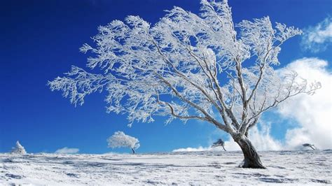 Beautiful Winter Wallpaper Hd by Beautiful Background Winter Snow Tree Hd Wallpaper