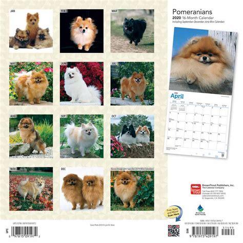 pomeranians calendar animal den
