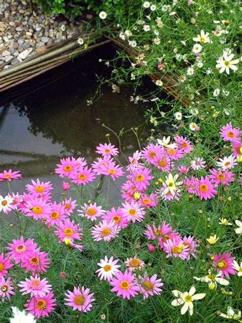 hton court flower show