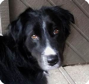 Keeper-adoption pending | Adopted Dog | 8017109 | White ...
