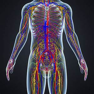 Lymphatic System Logistics For Exercise