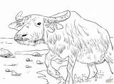 Coloring Water Buffalo Pages Printable Supercoloring Drawing Drawings Buffaloes Main Paper Skip Categories sketch template