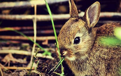 bunny windows  theme themepackme