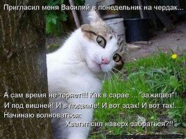 как связаться с губернатором волгоградской области бочаровым