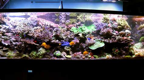 saltwater aquariums saltwater aquarium radio the saltwater aquarium podcast