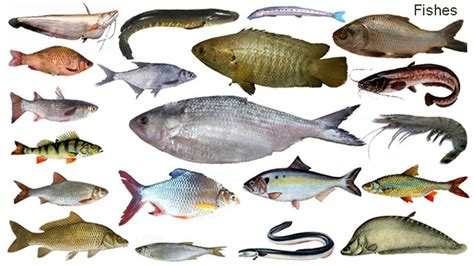 fish names meaning picture