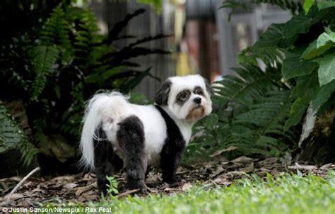 pookah  dog  panda makeover  animal stylist