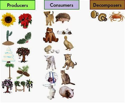 The Type Of The Living Organisms According To Their