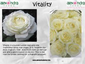 peonies flower vitality garden