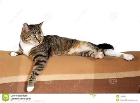 how to house a cat domestic house cat royalty free stock photo image 2190425