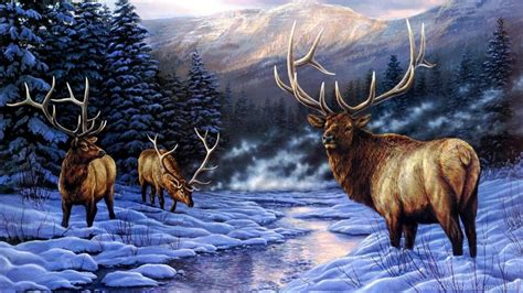 Animal Deer Wallpaper - deer wallpapers page 13 mule deer doe snow winter animals