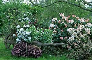 Arbuste Plein Soleil Longue Floraison : quelles plantes choisir pour une bordure ~ Premium-room.com Idées de Décoration