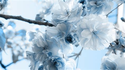 light blue flower wallpaper 59 images