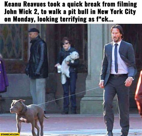 Keanu Reeves Meme - keanu reeves meme www pixshark com images galleries with a bite