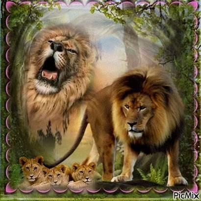 Lion Picmix