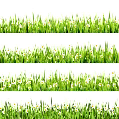 plant border designs realistic grass borders design vector 05 vector frames borders vector plant free download
