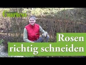 Rosen Schneiden Zeitpunkt : gartentipp rosen richtig schneiden youtube ~ Frokenaadalensverden.com Haus und Dekorationen