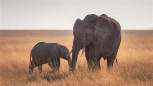 Mother, Baby, Elephant, 4k, Hd, Wallpapers
