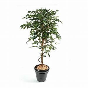 Plante Interieur Haute : ficus artificiel tronc simple grandes feuilles vert et vert cr me 150 270cm arbres artificiels ~ Teatrodelosmanantiales.com Idées de Décoration