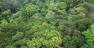 New paper raises question of tropical forest carbon ...
