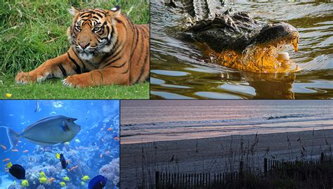 Top 5 Places To Spot Wildlife In Myrtle Beach