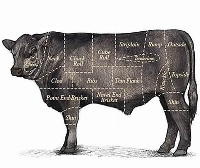 Beef Cut Clod Which Cuts Prime Slice