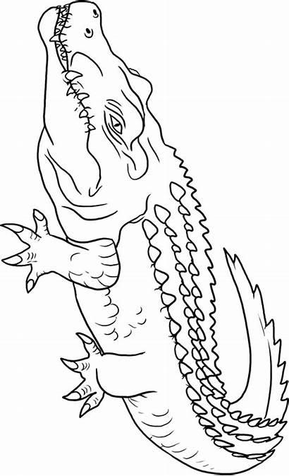 Coloring Crocodile Crocodiles Animals Cocodrilos Animal Dibujar