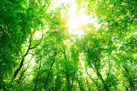 Green forest background stock photo. Image of bright