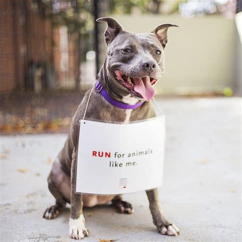 animal rescue league  boston  jonathan harlows
