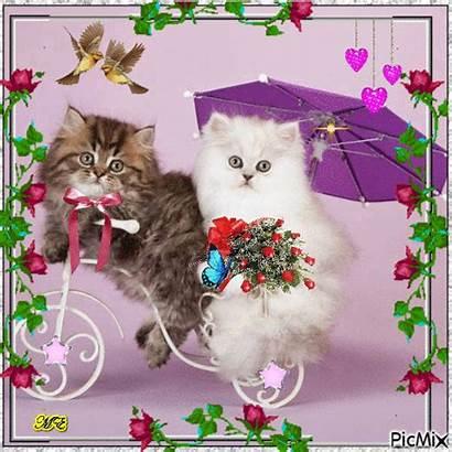 Picmix Cats Pt Cat Gatos Required Security