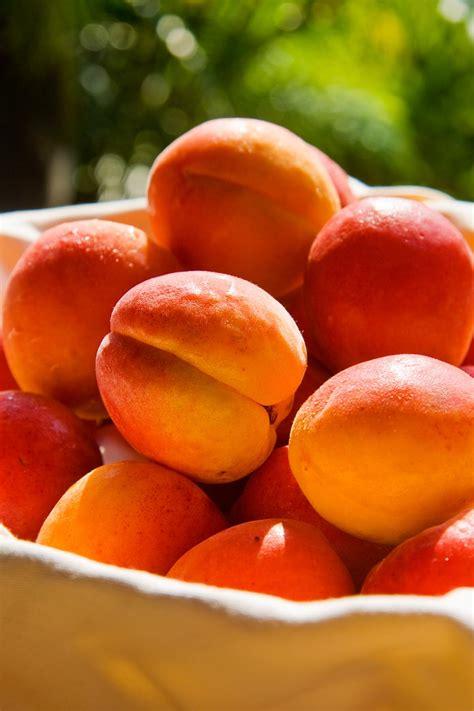 Bergeron Apricot - Elite Food Pte LtdElite Food Pte Ltd