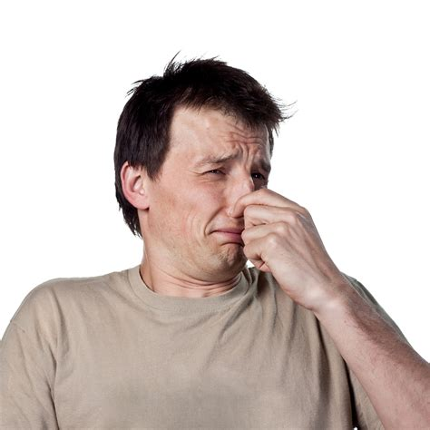 Getting Rid Of Odors In Cars  Smoke, Animal Odors, Etc. Interior Design Kitchener. Kitchen Floor Designs Ideas. Kitchen Design Gold Coast. Studio Apartment Kitchen Design. House Kitchen Interior Design. Disabled Kitchen Design. Japan Kitchen Design. Kitchen Ceramic Tile Designs