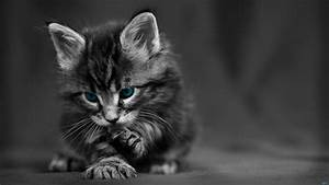 60+ Cat wallpapers ·① Download free awesome full HD ...