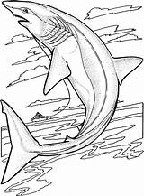 Shark Coloring Pages Jumping Animals Sharks Water sketch template