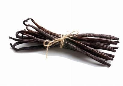 Vanilla Bean Freepngimg