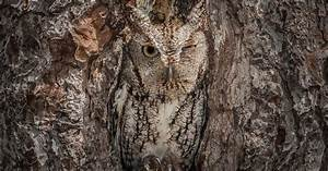 Camouflaged Animals Who Are Almost Impossible To See