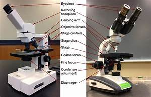 The Parts Of A Compound Microscope And How To Handle Them