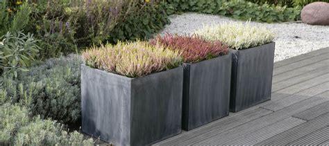 Moderne Bepflanzung für Terrasse und Garten Heidetrends