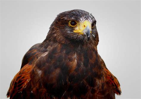 top birds  prey shots