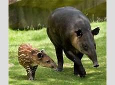 Reciprocal Zoo List Zoological Society of Milwaukee