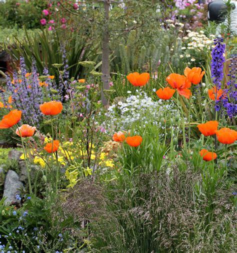 http://www.anniesannuals.com/plants/view/?id=2219